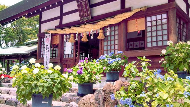 20150615御裳神社のあじさい祭