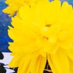 138タワーパークの一宮菊花大会