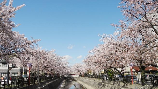 20140417一宮桜まつり