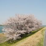 桜スポットは愛知県一宮市内でどこにある?