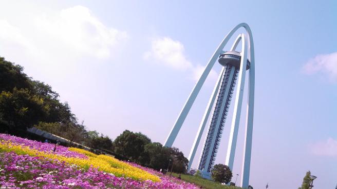 20151026タワーパークの花