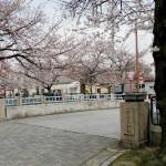 一宮市内の桜名所、大江川河畔の桜並木に架かる橋の名前