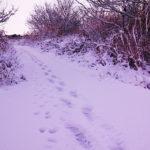強力な寒波が押し寄せた愛知県一宮市でも雪景色