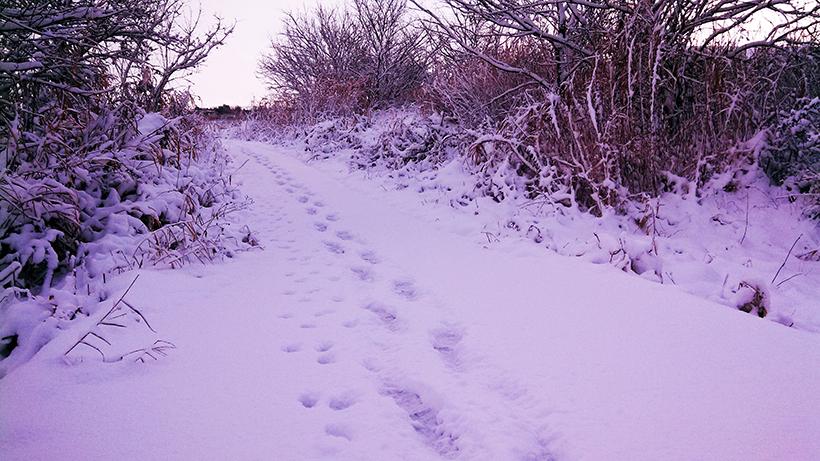 20170116雪景色