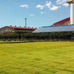 農協の育苗センターで稲の苗が育っています