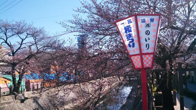 20140327一宮桜まつり