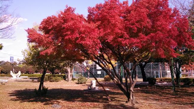 20141126大平島公園の紅葉
