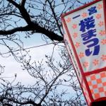 20160323一宮桜まつり
